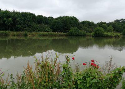 Beautiful stocked carp lake