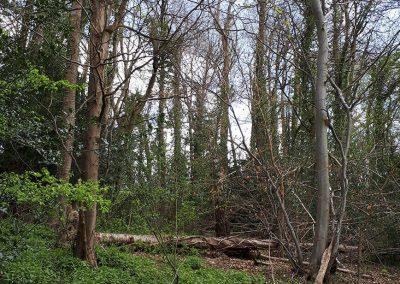 Walk through ancient woodland