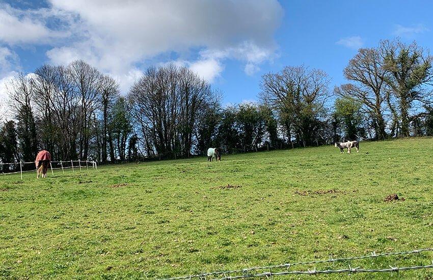 Horses in acres of fields